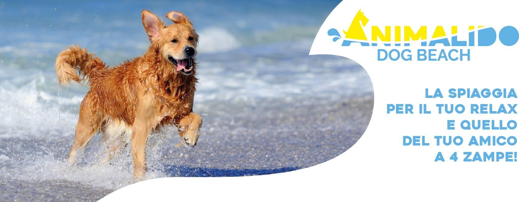 Animalido Dog Beach